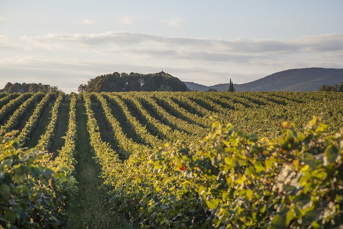 Vinogradi - kraški vinorodni okoliš